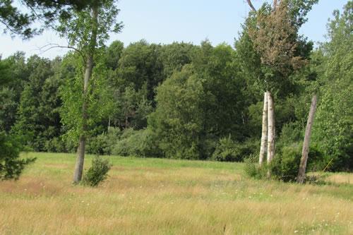 DEC Wildlife Management Area off Albion Road
