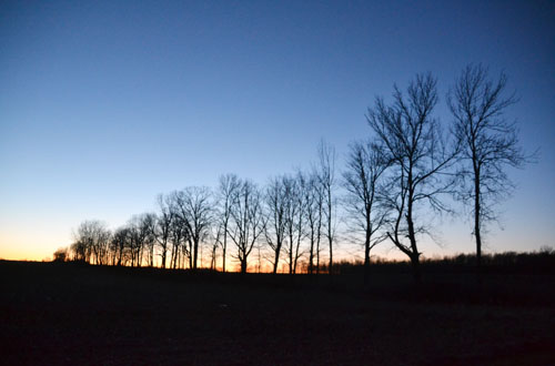 File photo by Tom Rivers: A row of trees is pictured at sunset last March on East Barre Road in Barre. The town is eyed for a 200-megawatt wind turbine project.