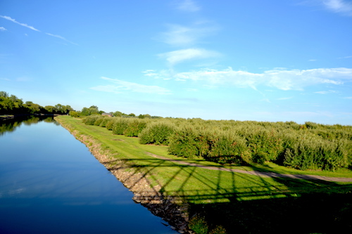 Photo by Tom Rivers: An apple orchard is pictured late Friday from the canal bridge on Presbyterian Road in Albion.