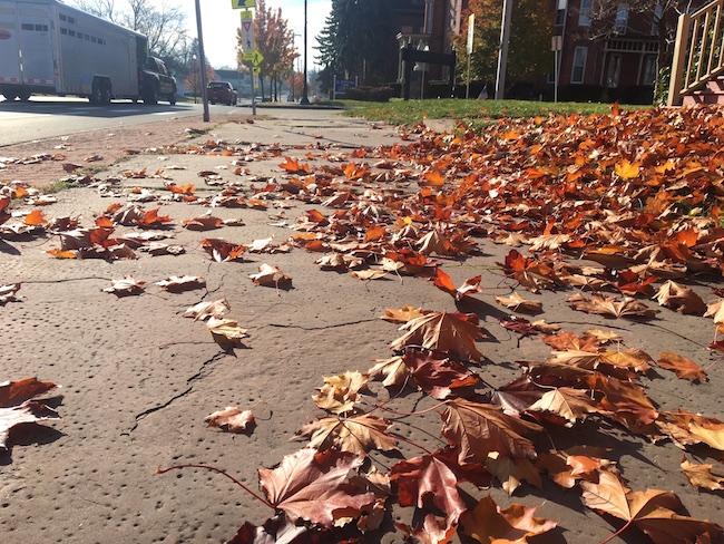111716_leaves
