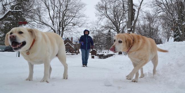 121716_snowdogs