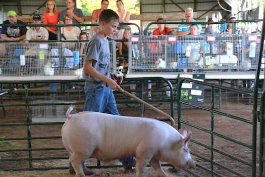 Big bids push 4 h market auction past 20k orleans hub jack cechinni of medina is pictured with the grand champion hog which sold for 4 a pound or 1068 to western new york energy jack also had the reserve thecheapjerseys Image collections