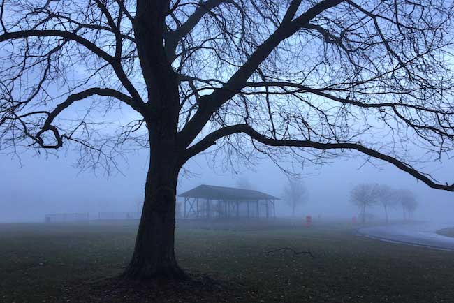 After Rains Fog Rolls Into Madison >> Search Results Orleans Hub Page 128