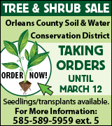 1799-2 Tree & Shrub Sale