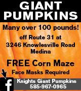 175-61 Pumpkins